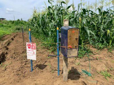 トウモロコシの電気柵
